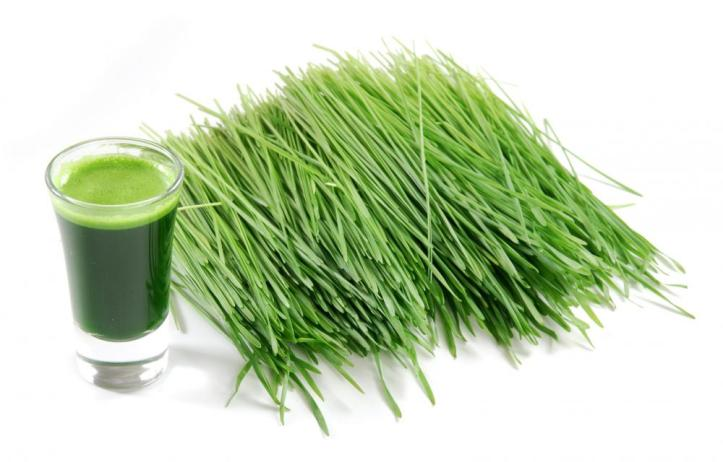 wheatgrass-1